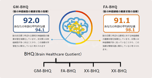 BHQの分類図