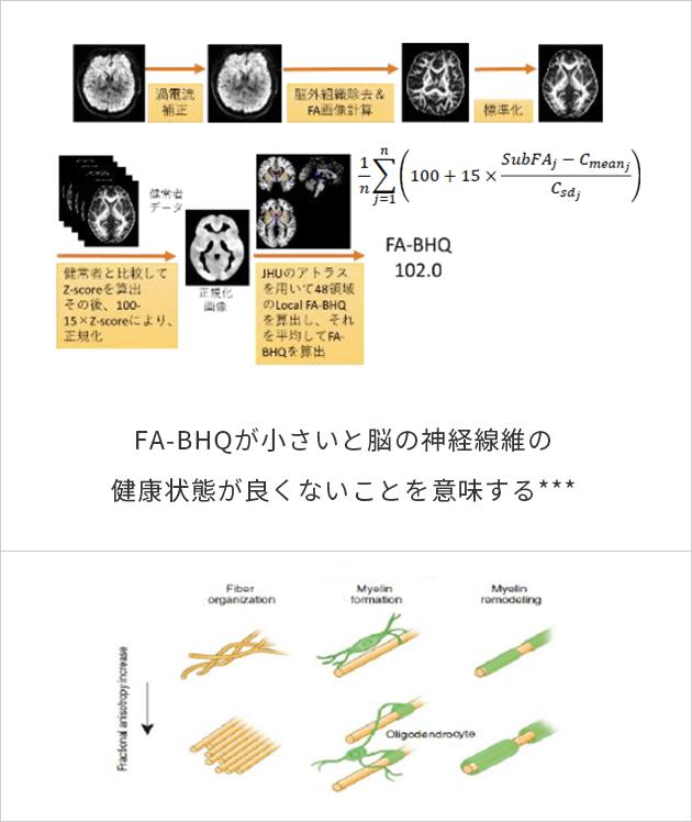 脳の微細構造統合度指標を表した図